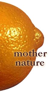Mother Nature Orange Nipple