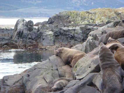 Seals-Beagle-Channel
