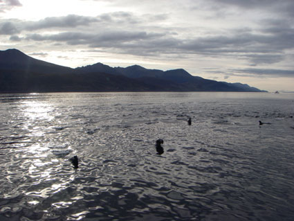 Beagle Channel seals