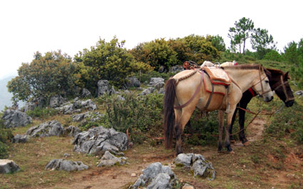 China-Lijiang-trusty-steeds