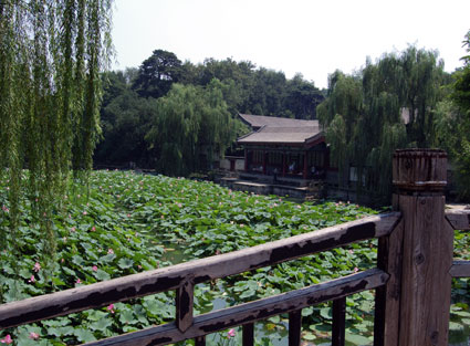 Summer Palace lilypads
