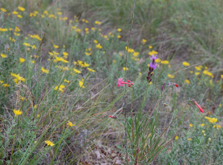 Cheyenne Mountain State Park wildflowers
