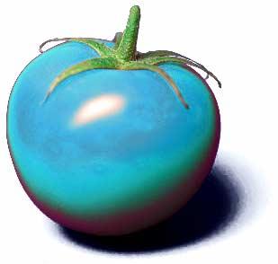 tomato berry