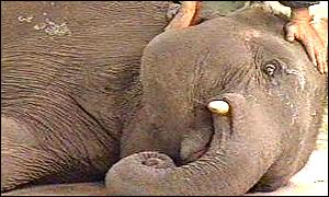 sick-elepjhant