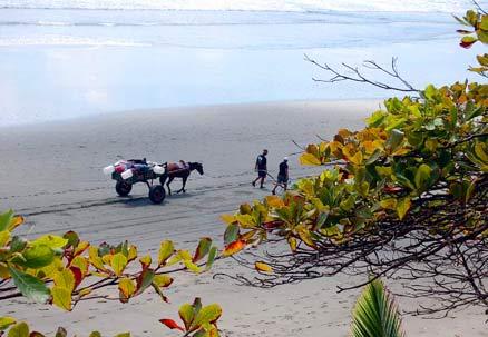 La Leona horse cart