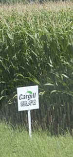 cornfield cargill nebraska